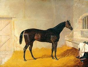 Mr. G. Blakelock?s Racehorse A British Yeoman