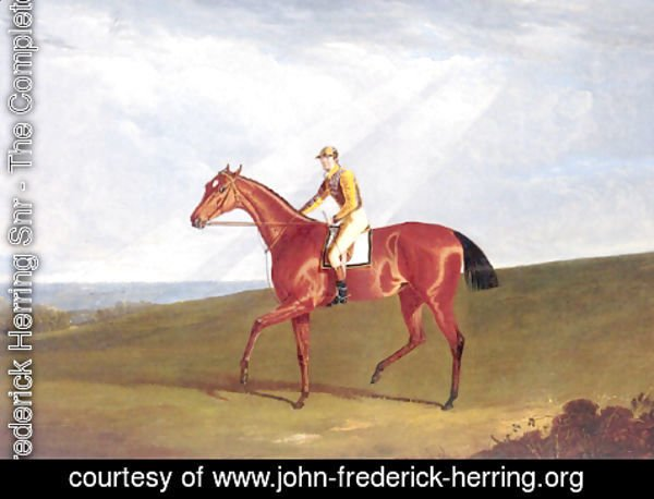 John Frederick Herring Snr - Ringlet With Jockey Up