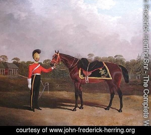 John Frederick Herring Snr - Robert Knox with his Charger, 6th Dragoon Guards (Caribineers)
