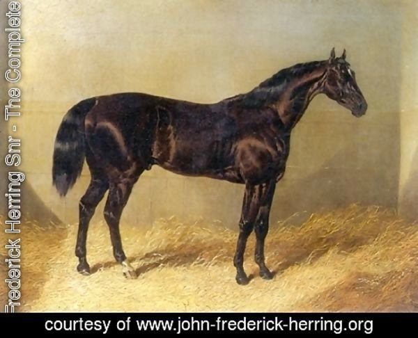 John Frederick Herring Snr - Saddler Dark Bay Racehorse in Stable