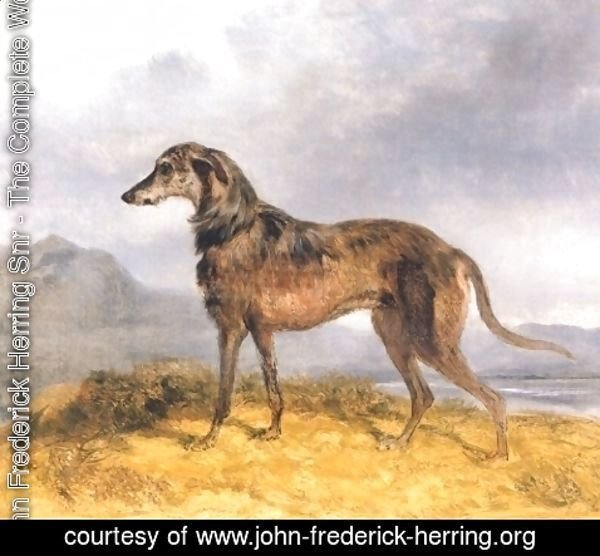 John Frederick Herring Snr - Scottish Deerhound