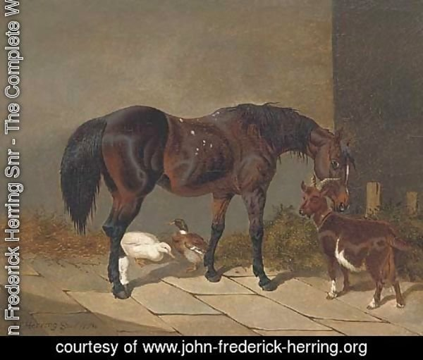 A bay horse with a goat and ducks