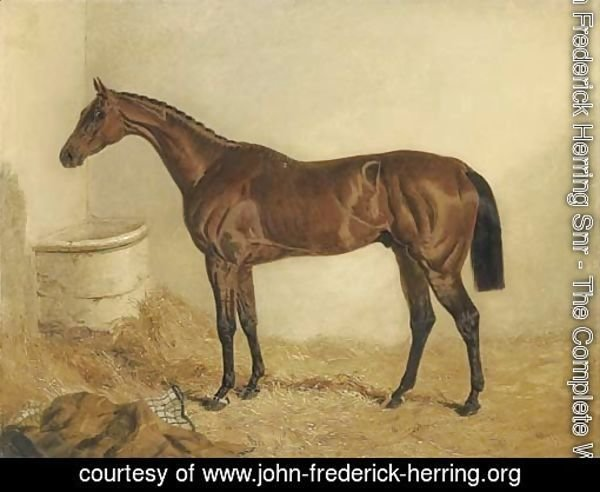 Little Wonder, winner of the Derby, 1840, in a stable