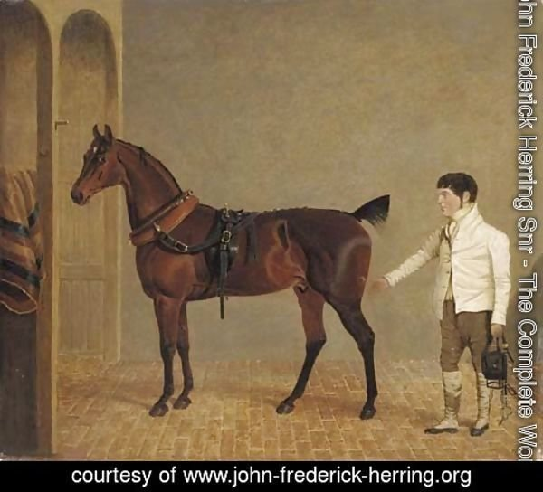 A carriage horse and groom in a stable