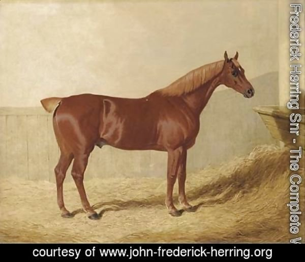 John Frederick Herring Snr - A chestnut in a stable