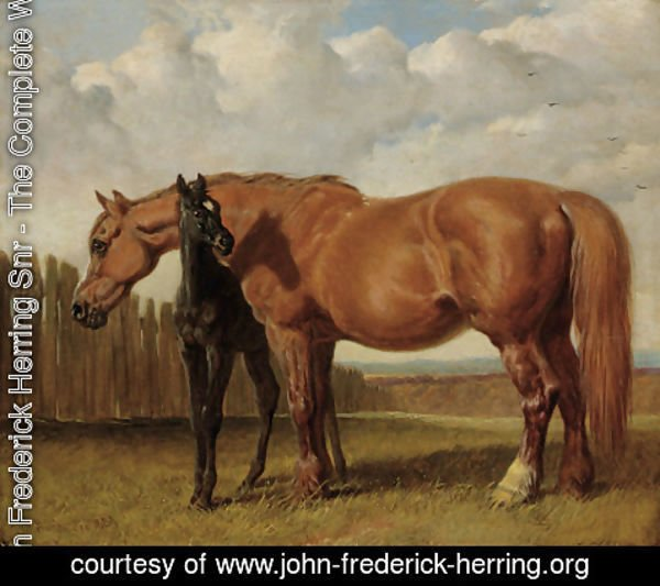 John Frederick Herring Snr - A chestnut mare with her foal in a paddock