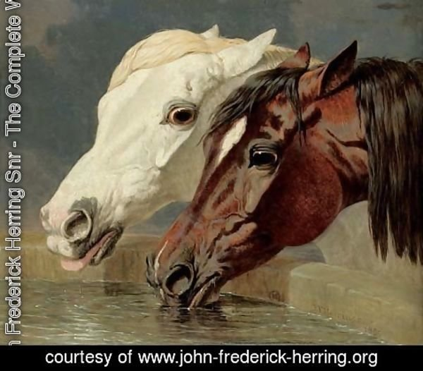 John Frederick Herring Snr - A grey and a dark bay, drinking at a trough