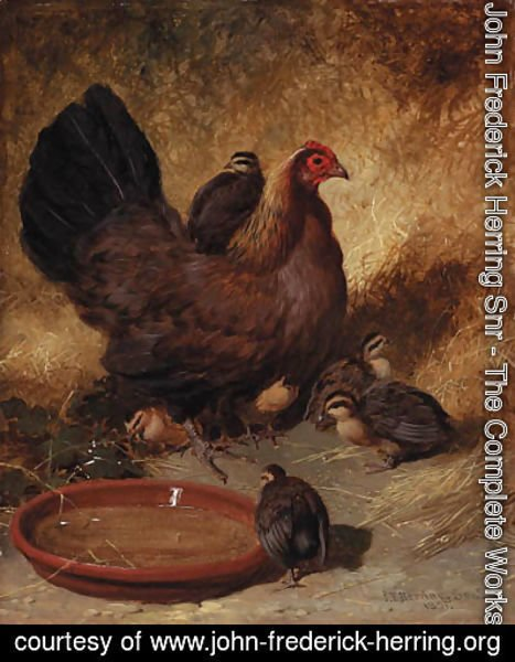 John Frederick Herring Snr - A hen and chicks
