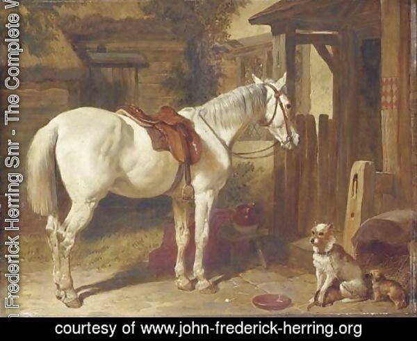 A saddled grey pony and dogs outside an inn