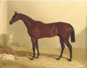 John Frederick Herring Snr - Bay Middleton, a bay racehorse in a loose box