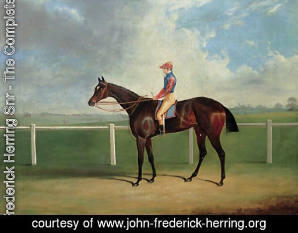 John Frederick Herring Snr - Bessy Bedlam, a bay racehorse with T. Nicholson up, on a racecourse