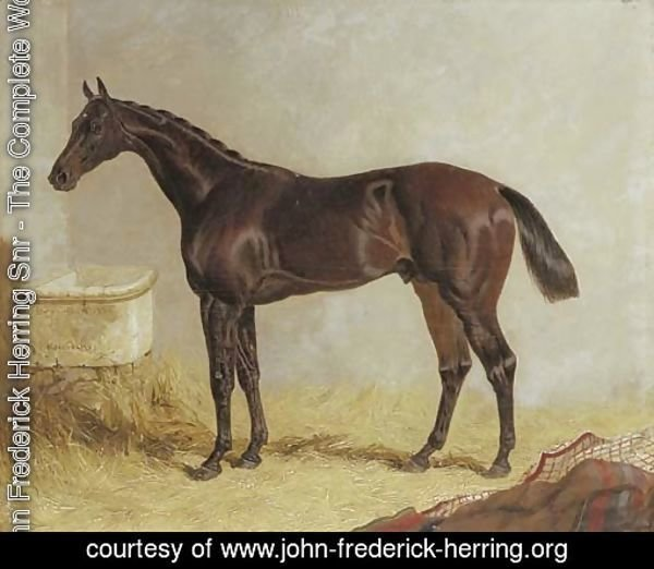 Birmingham, winner of the 1830 St. Leger Stakes, in a stable