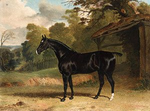 Black Tom, a black hunter, beside a stable, in a wooded river  landscape