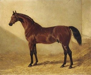 John Frederick Herring Snr - Glaucus, a bay racehorse in a stable