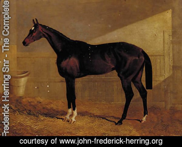 John Frederick Herring Snr - Lucetta, a bay racehorse in a stable