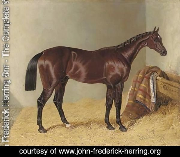 John Frederick Herring Snr - Mango, winner of the 1837 St. Leger Stakes, in a stable