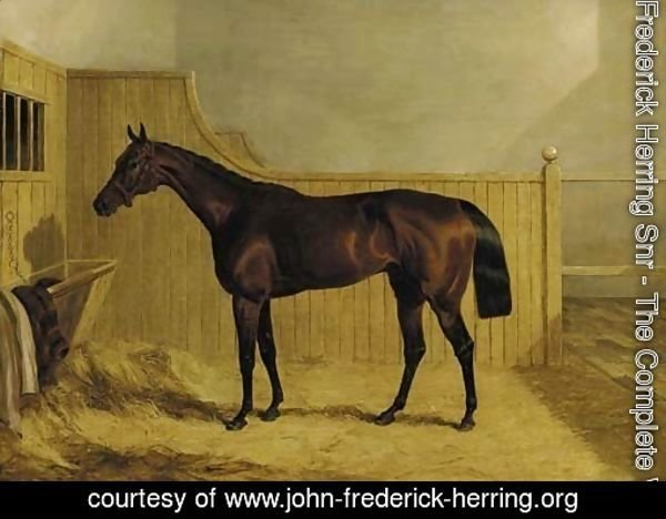 Mr Ridsdale's Bloomsbury, winner of the 1839 Derby, in a stable