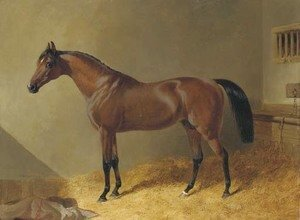 John Frederick Herring Snr - Pacelot, a bay stallion, in a stable