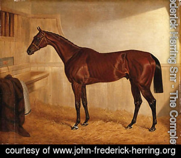 John Frederick Herring Snr - Lord Jersey's Bay Middleton in a Stable