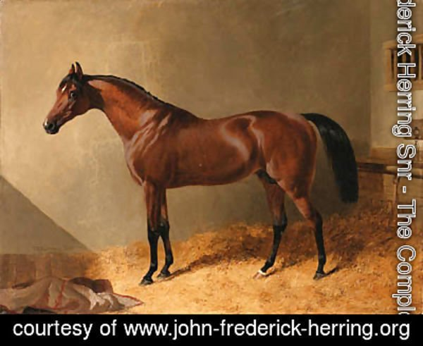 John Frederick Herring Snr - Pacolet, A Bay Stallion, in a Stable