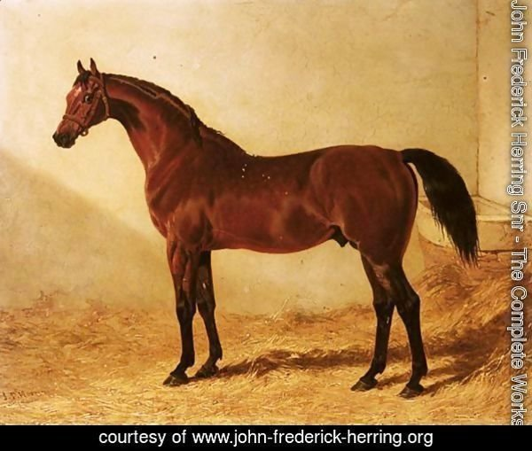 Glaucus, A Bay Racehorse In A Stable 2