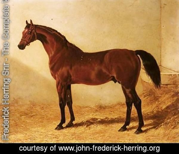 John Frederick Herring Snr - Glaucus, A Bay Racehorse In A Stable 2