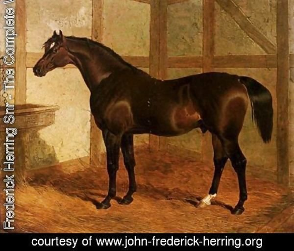John Frederick Herring Snr - Partisan, A Dark Bay Racehorse In A Stable
