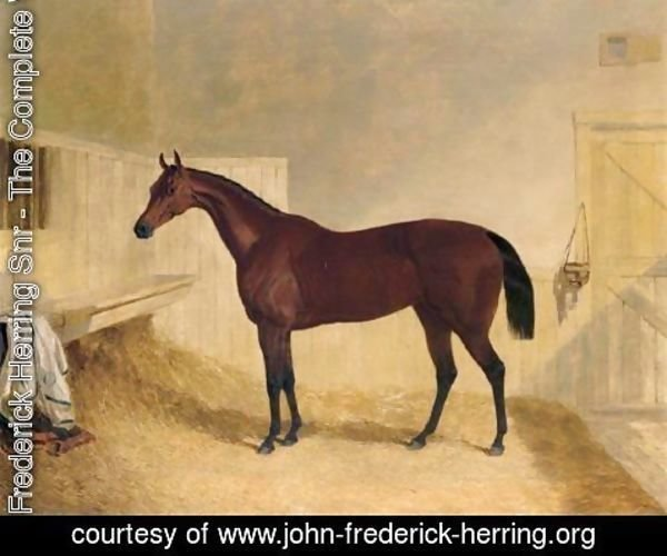 John Frederick Herring Snr - Mr William Orde's Bay Filly Bees-Wing In A Loose Box 2