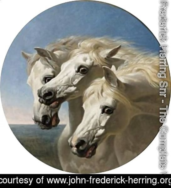 The Pharaoh's Horses