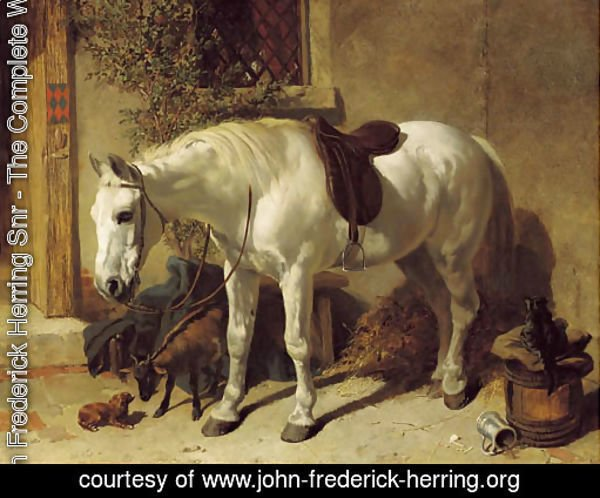 A grey horse, with a goat, a toy spaniel